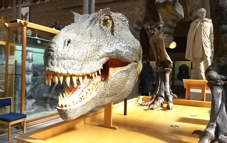 Natural History Museum Luxembourg